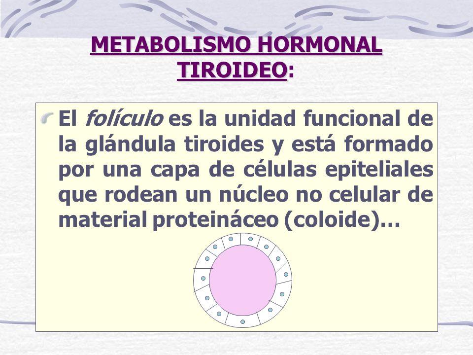 METABOLISMO HORMONAL TIROIDEO: La formación de la hormona tiroidea es un proceso complejo y finamente regulado, que puede ser dividido, con un criterio pedagógico, en distintas etapas…