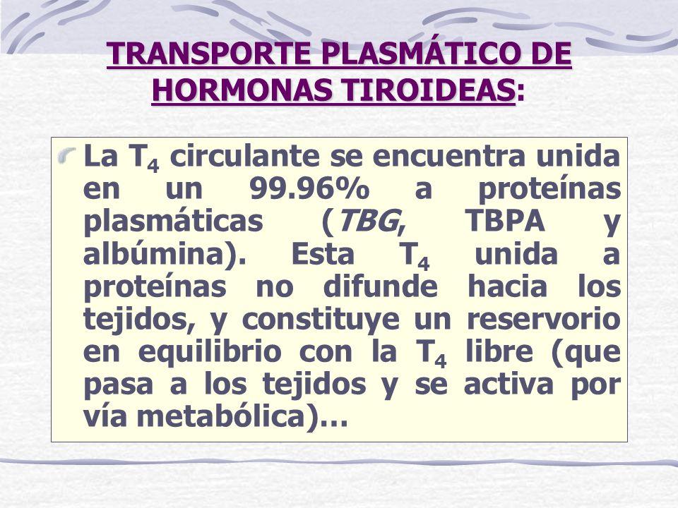 TRANSPORTE PLASMÁTICO DE HORMONAS TIROIDEAS TRANSPORTE PLASMÁTICO DE HORMONAS TIROIDEAS: La T 4 circulante se encuentra unida en un 99.96% a proteínas