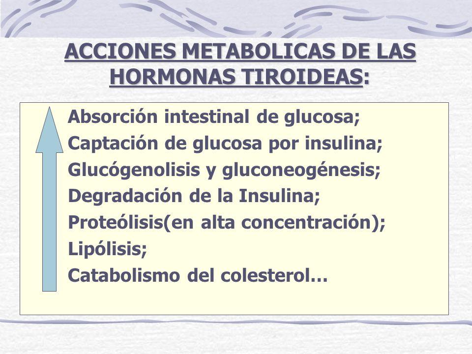 Absorción intestinal de glucosa; Captación de glucosa por insulina; Glucógenolisis y gluconeogénesis; Degradación de la Insulina; Proteólisis(en alta