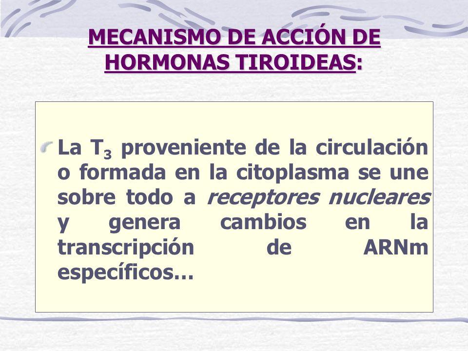 MECANISMO DE ACCIÓN DE HORMONAS TIROIDEAS: La T 3 proveniente de la circulación o formada en la citoplasma se une sobre todo a receptores nucleares y