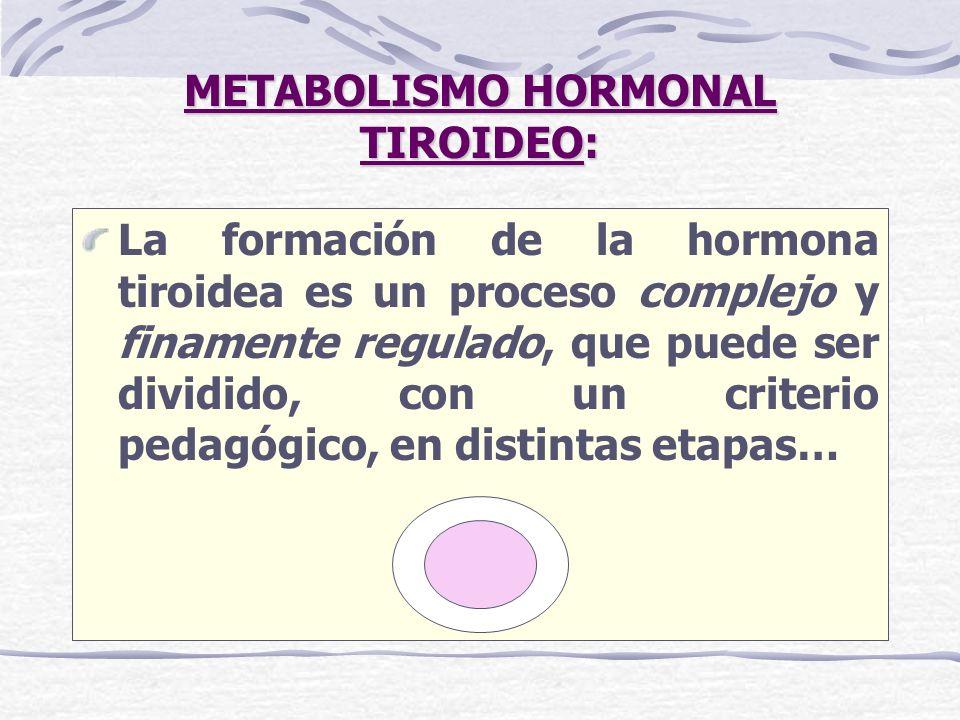 METABOLISMO HORMONAL TIROIDEO METABOLISMO HORMONAL TIROIDEO: La T 4 es el producto principal de la secreción de la glándula tiroides, pero la T 3 formada en mayor medida por desyodación tisular periférica de la T 4 tiene una afinidad mayor por los receptores nucleares, lo que hace de esta yodotironina una hormona tiroidea mucho más potente que la T 4...