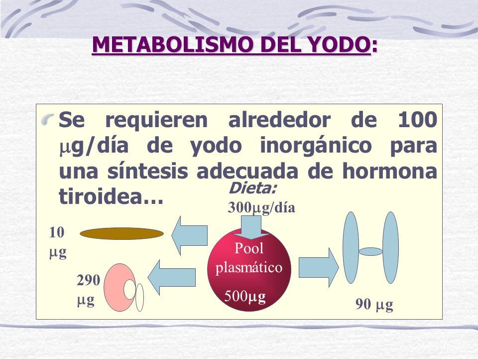 METABOLISMO DEL YODO: Se requieren alrededor de 100 g/día de yodo inorgánico para una síntesis adecuada de hormona tiroidea… Pool plasmático 10 g 290