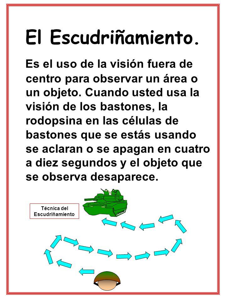 El Escudriñamiento. Es el uso de la visión fuera de centro para observar un área o un objeto. Cuando usted usa la visión de los bastones, la rodopsina