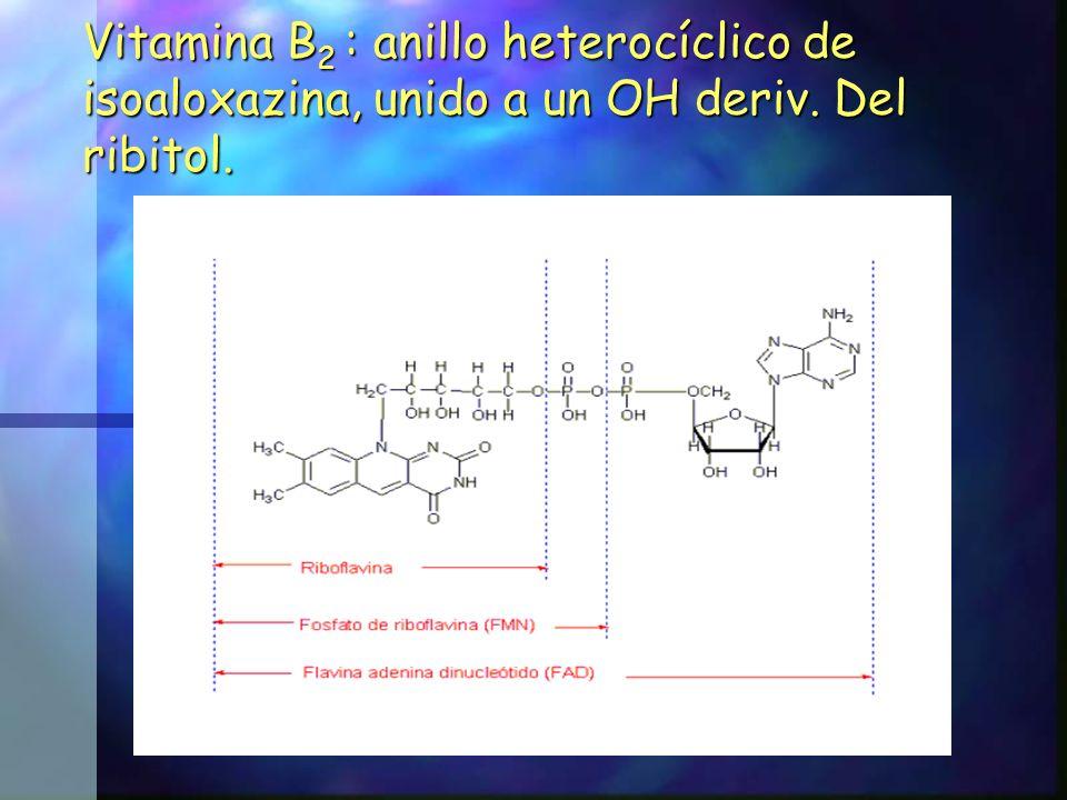 Vitamina B 2 : anillo heterocíclico de isoaloxazina, unido a un OH deriv. Del ribitol.
