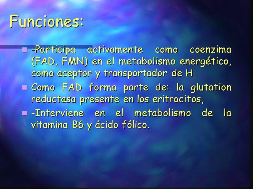 Funciones: -Participa activamente como coenzima (FAD, FMN) en el metabolismo energético, como aceptor y transportador de H -Participa activamente como