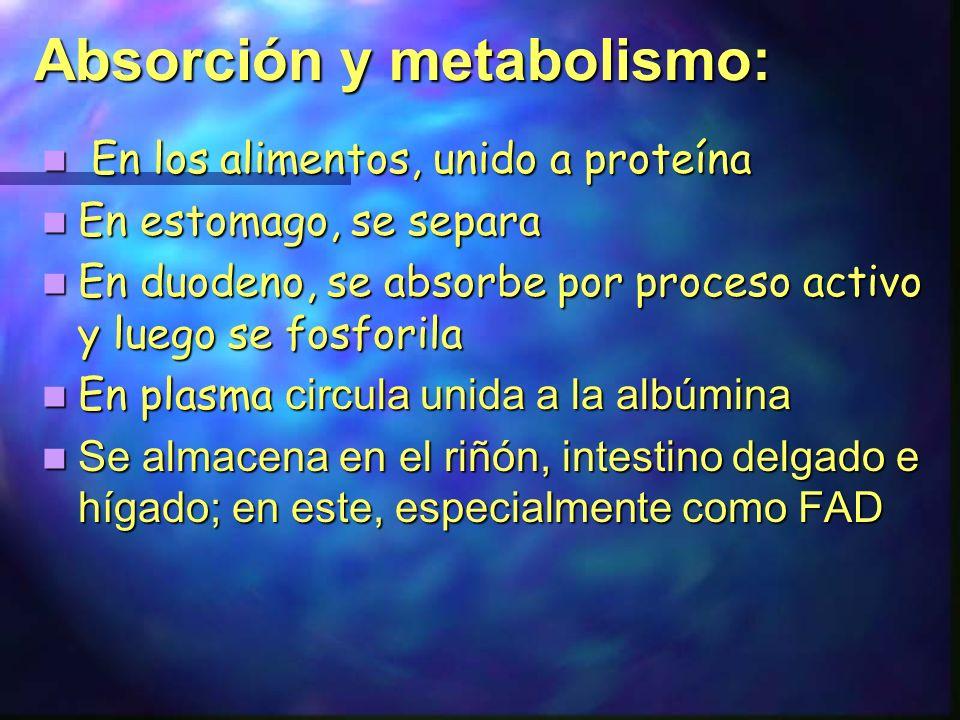 Absorción y metabolismo: En los alimentos, unido a proteína En los alimentos, unido a proteína En estomago, se separa En estomago, se separa En duoden
