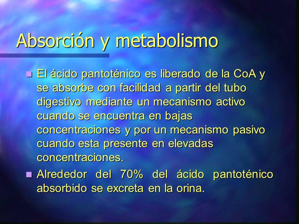 Absorción y metabolismo Absorción y metabolismo El ácido pantoténico es liberado de la CoA y se absorbe con facilidad a partir del tubo digestivo medi