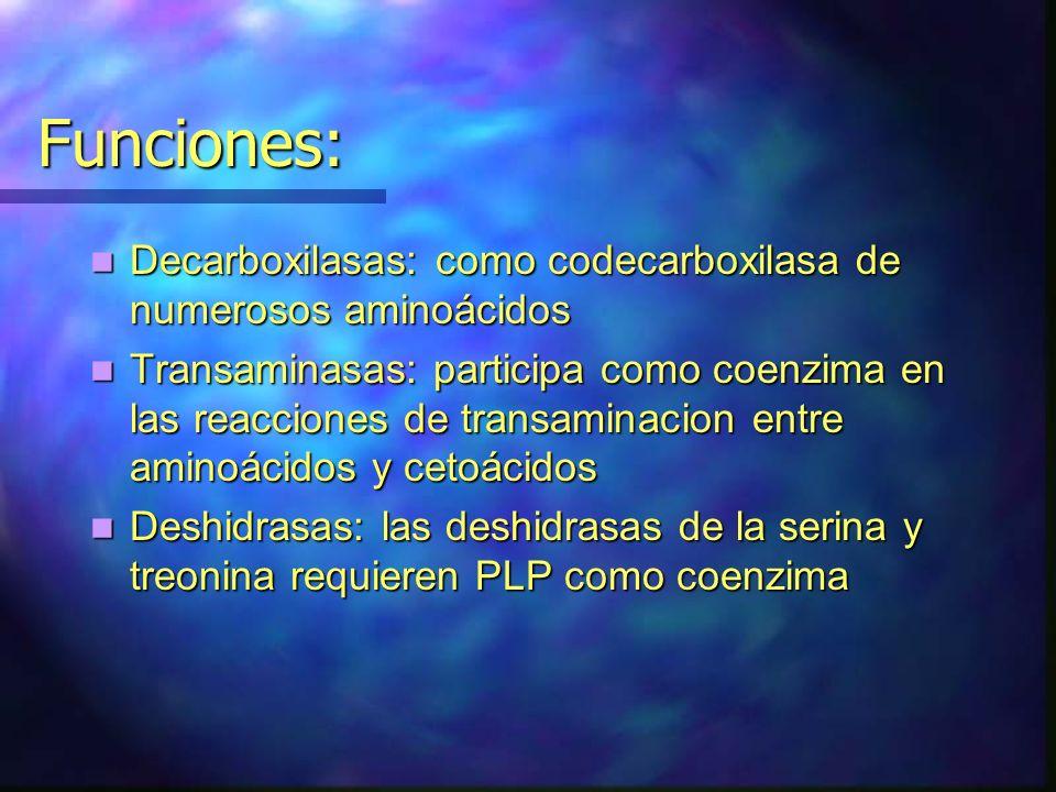 Funciones: Decarboxilasas: como codecarboxilasa de numerosos aminoácidos Decarboxilasas: como codecarboxilasa de numerosos aminoácidos Transaminasas: