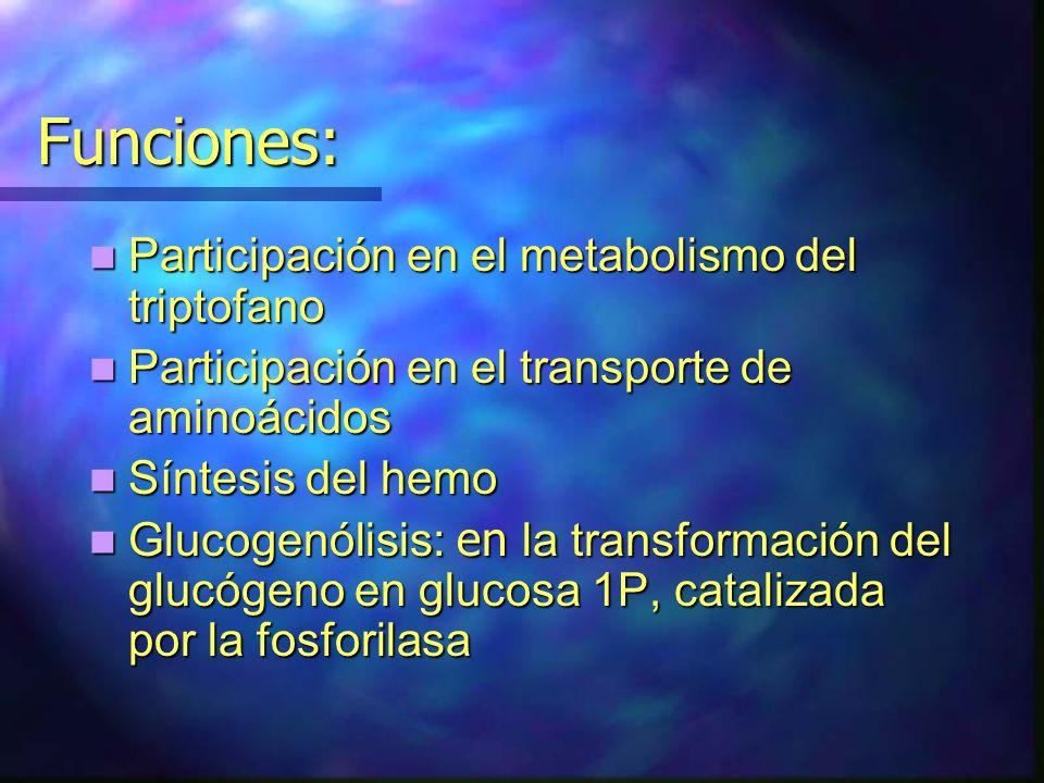 Funciones: Participación en el metabolismo del triptofano Participación en el metabolismo del triptofano Participación en el transporte de aminoácidos