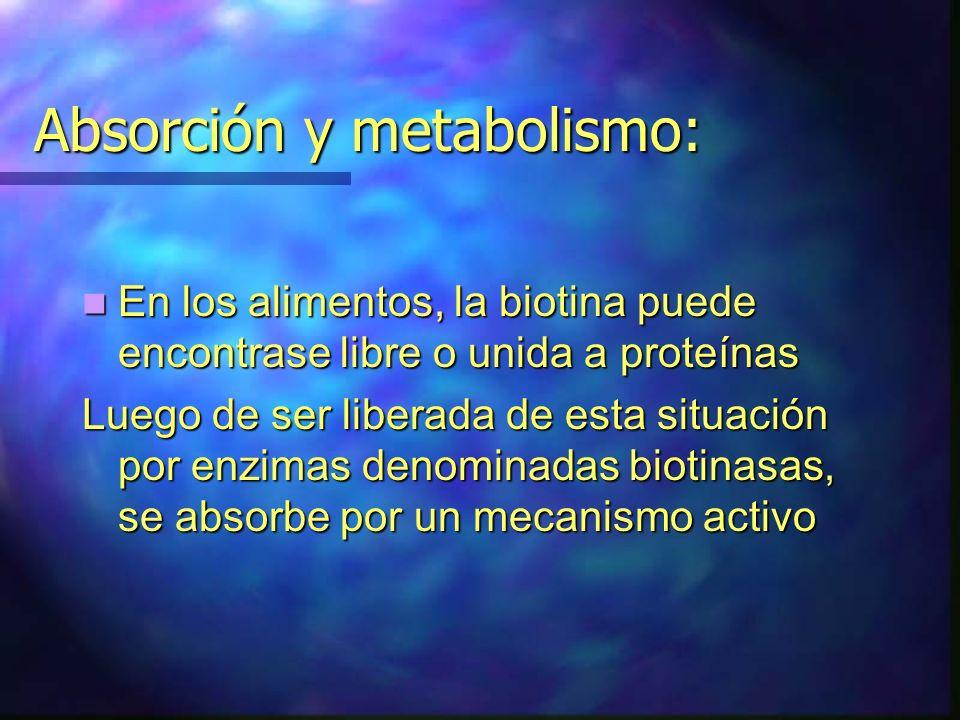 Absorción y metabolismo: En los alimentos, la biotina puede encontrase libre o unida a proteínas En los alimentos, la biotina puede encontrase libre o