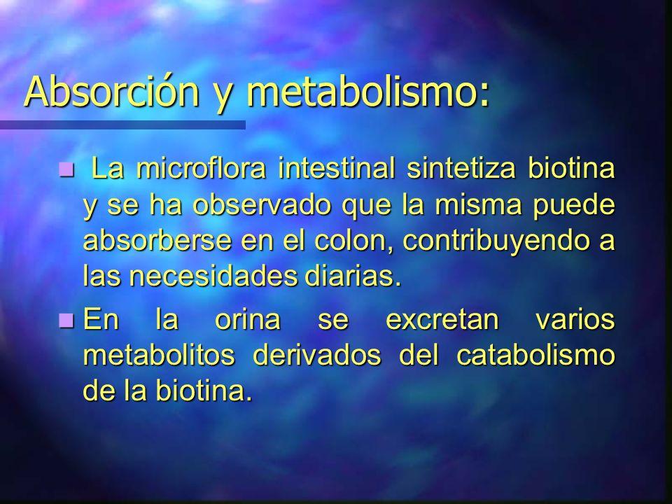 Absorción y metabolismo: La microflora intestinal sintetiza biotina y se ha observado que la misma puede absorberse en el colon, contribuyendo a las n