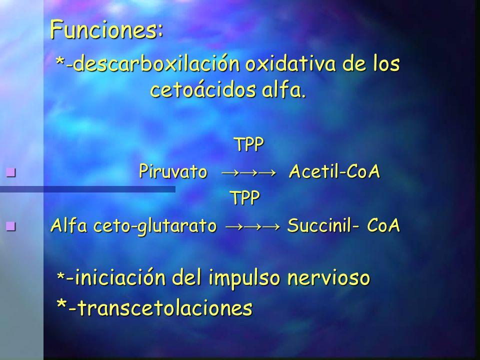 Funciones: *- descarboxilación oxidativa de los cetoácidos alfa. TPP TPP Piruvato Acetil-CoA Piruvato Acetil-CoA TPP TPP Alfa ceto-glutarato Succinil-