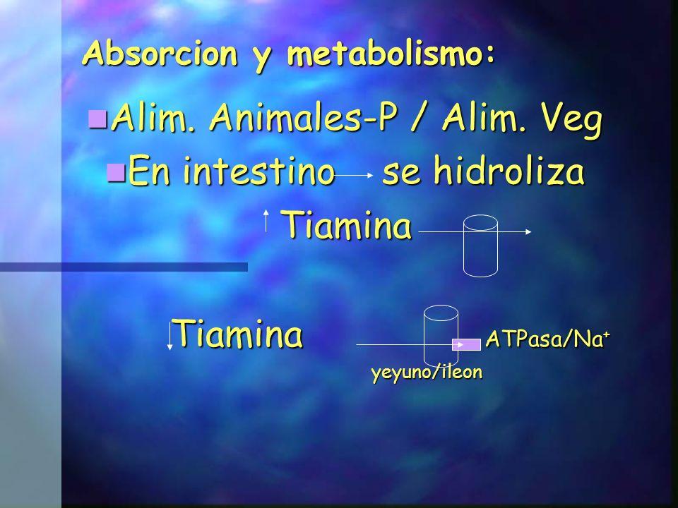 La tiamina absorbida es captada por los tejidos, de acuerdo a sus necesidades y grado de saturación, siendo fosforilada, en un 90% a TPP y en un 10% a TTP, de acuerdo a las siguientes reacciones: pirofosfoquinasa pirofosfoquinasa Tiamina + ATP Tiamina pirofosfato + AMP Tiamina + ATP Tiamina pirofosfato + AMP Mg ++ Mg ++ fosforil transferasa fosforil transferasa Tiamina pirofosfato + ATP Tiamina trifosfato