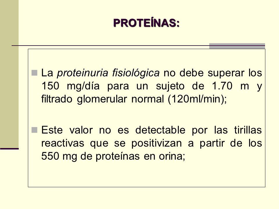 PROTEÍNAS: proteinuria fisiológica La proteinuria fisiológica no debe superar los 150 mg/día para un sujeto de 1.70 m y filtrado glomerular normal (12