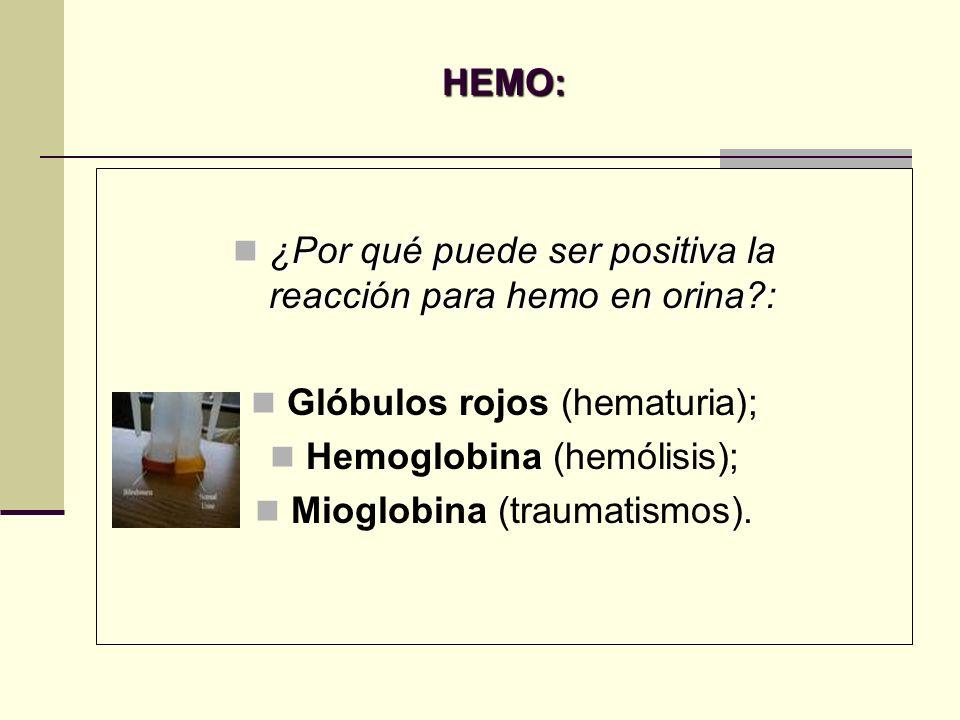 HEMO: ¿Por qué puede ser positiva la reacción para hemo en orina?: ¿Por qué puede ser positiva la reacción para hemo en orina?: Glóbulos rojos (hematu