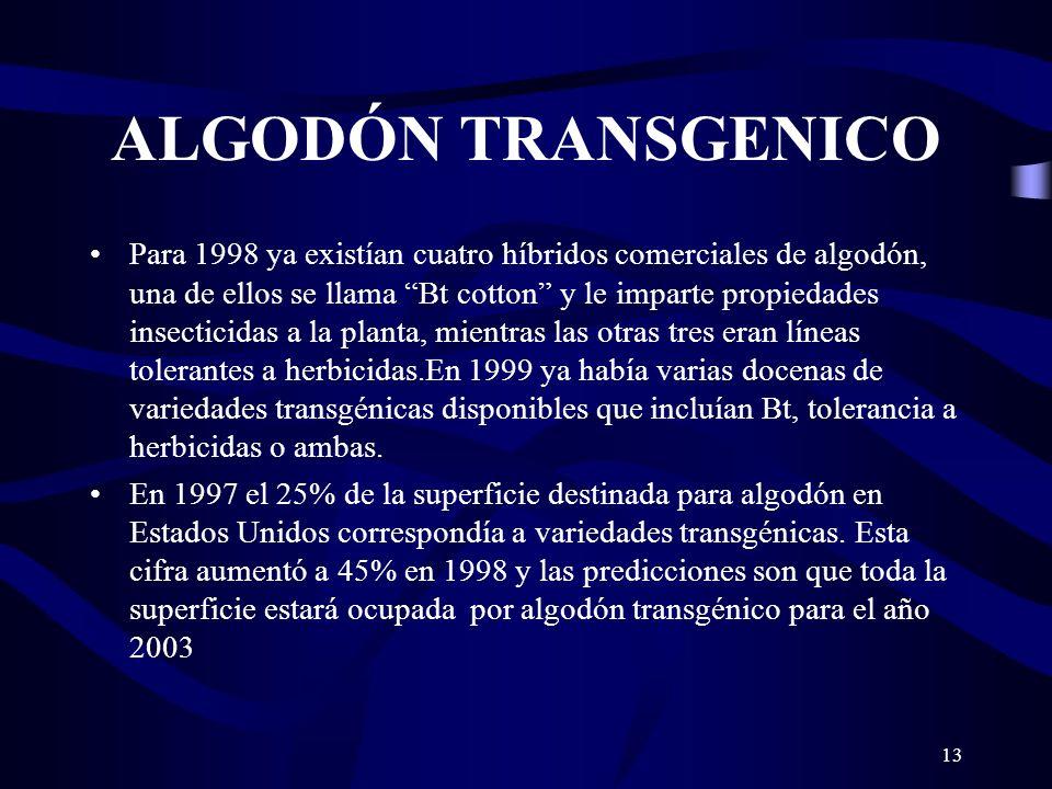 13 ALGODÓN TRANSGENICO Para 1998 ya existían cuatro híbridos comerciales de algodón, una de ellos se llama Bt cotton y le imparte propiedades insectic
