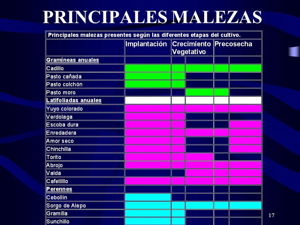17 PRINCIPALES MALEZAS