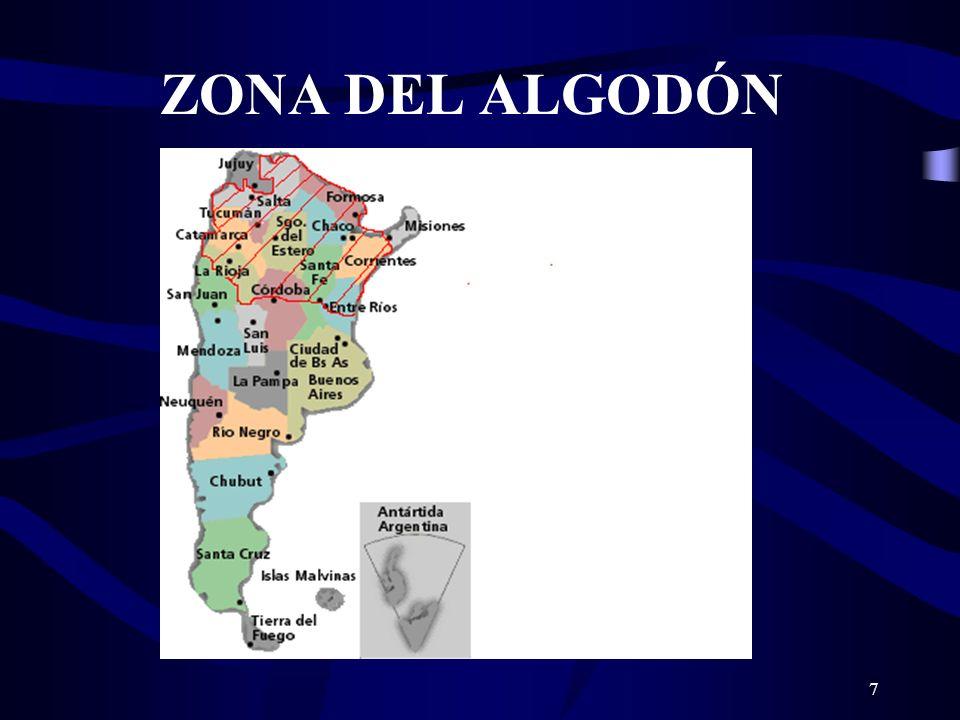 7 ZONA DEL ALGODÓN