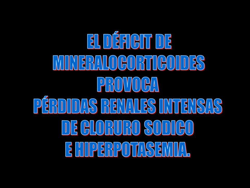 FUNCIONES DE LOS GLUCOCORTICOIDES.