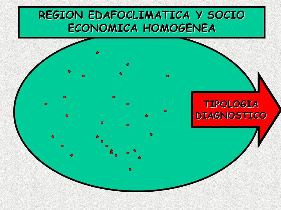 REGION EDAFOCLIMATICA Y SOCIO ECONOMICA HOMOGENEA TIPOLOGIADIAGNOSTICO