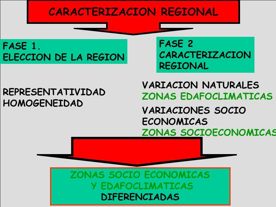 FASE 1. ELECCION DE LA REGION REPRESENTATIVIDAD HOMOGENEIDAD FASE 2 CARACTERIZACION REGIONAL VARIACION NATURALES ZONAS EDAFOCLIMATICAS VARIACIONES SOC
