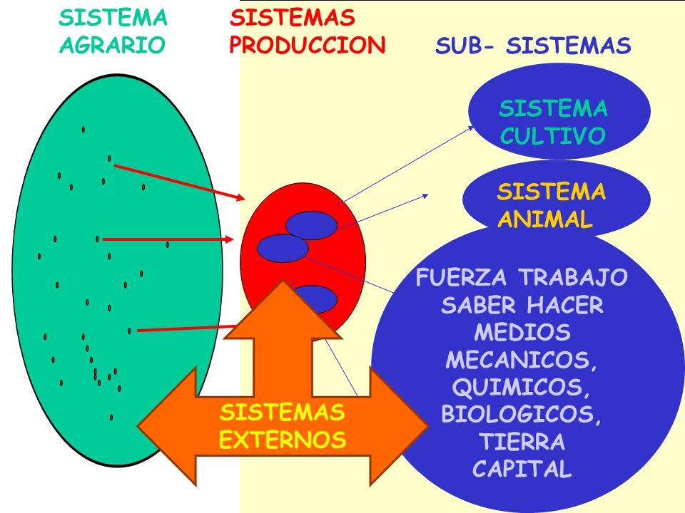 SISTEMA AGRARIO SISTEMAS PRODUCCION SUB- SISTEMAS SISTEMA CULTIVO SISTEMA ANIMAL FUERZA TRABAJO SABER HACER MEDIOS MECANICOS, QUIMICOS, BIOLOGICOS, TI