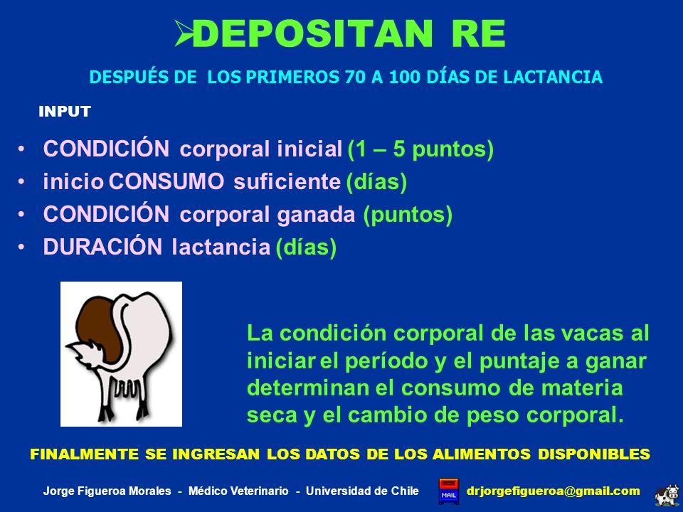 J DAIRY SCI BAKER 1995 El modelo predice la concentración de proteína neta láctea desde el aporte de proteína metabolizable de las dietas sin discriminar el aporte de aminoácidos esenciales en la PND SIMULACIÓN 1234 CONSUMO PND (GR) 856120112681213 PROTEÍNA NETA (GR) LECHE REAL (KG) 786 29.30 930 31.62 975 31.62 950 31.61 Jorge Figueroa Morales - Médico Veterinario - Universidad de Chile drjorgefigueroa @ gmail.com