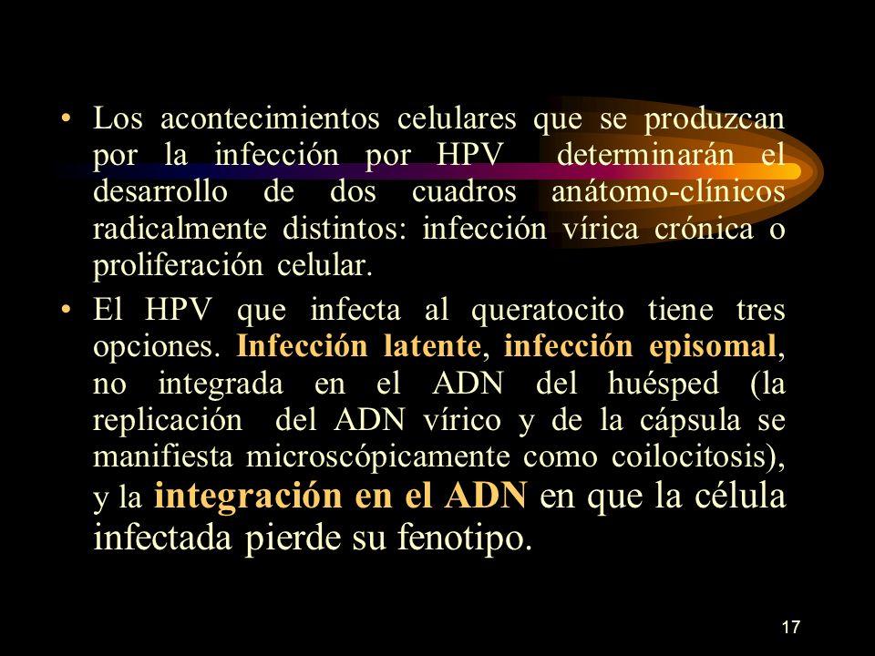 16 CLASIFICACIÓN DE LOS HPV DE ACUERDO CON LA CAPACIDAD ONCOGÉNICA Tipo de HPV: 6-11-42-44. 31-33-35-51-52- 58. 16-18-32-45. Capacidad oncogénica Baja