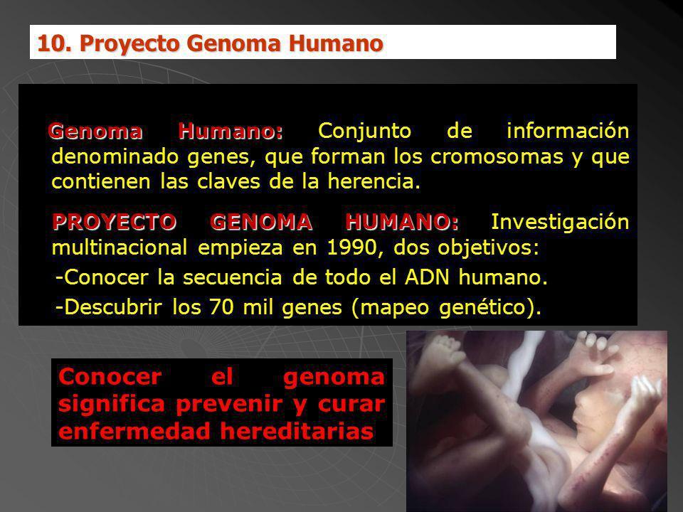 PROYECTO DEL GENOMA HUMANO Genoma Humano: Genoma Humano: Conjunto de información denominado genes, que forman los cromosomas y que contienen las claves de la herencia.