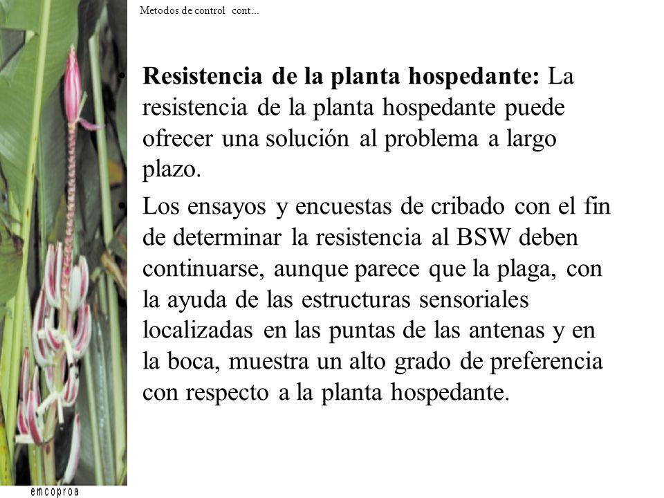 Resistencia de la planta hospedante: La resistencia de la planta hospedante puede ofrecer una solución al problema a largo plazo. Los ensayos y encues