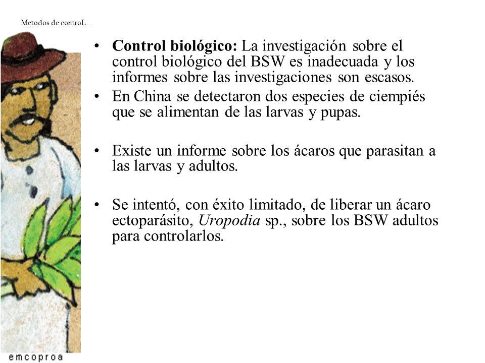 Control biológico: La investigación sobre el control biológico del BSW es inadecuada y los informes sobre las investigaciones son escasos. En China se