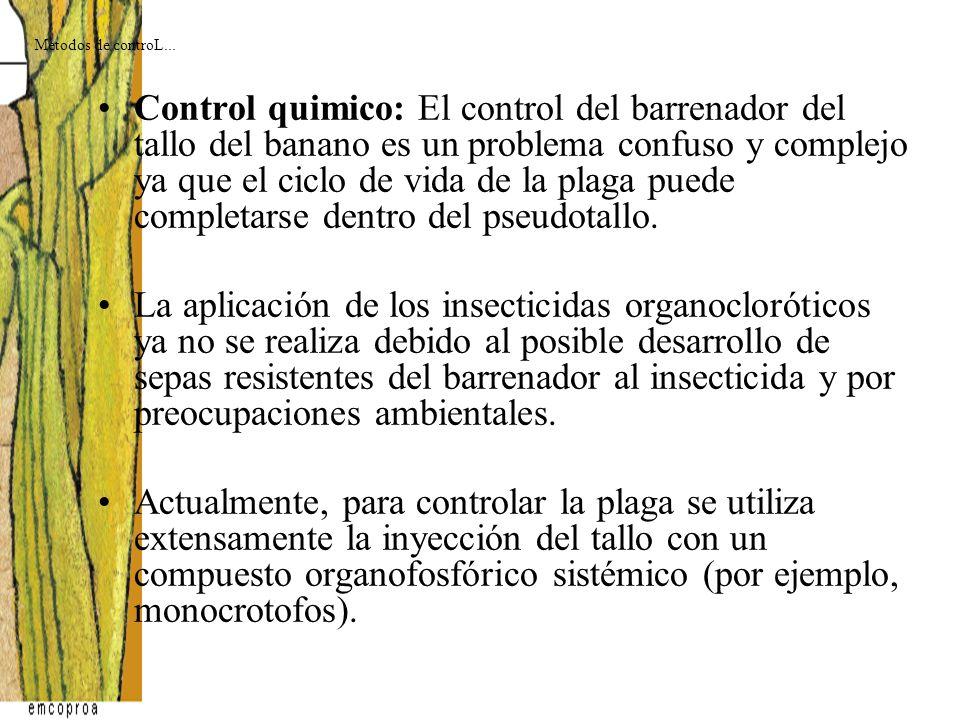 Control quimico: El control del barrenador del tallo del banano es un problema confuso y complejo ya que el ciclo de vida de la plaga puede completars