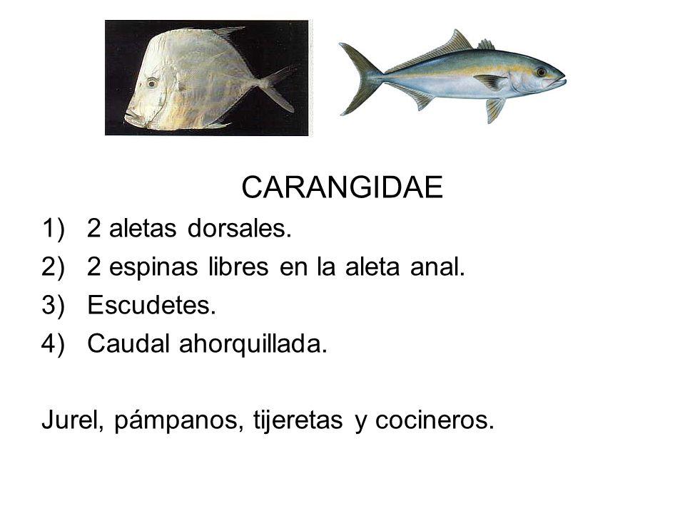 CARANGIDAE 1)2 aletas dorsales. 2)2 espinas libres en la aleta anal. 3)Escudetes. 4)Caudal ahorquillada. Jurel, pámpanos, tijeretas y cocineros.
