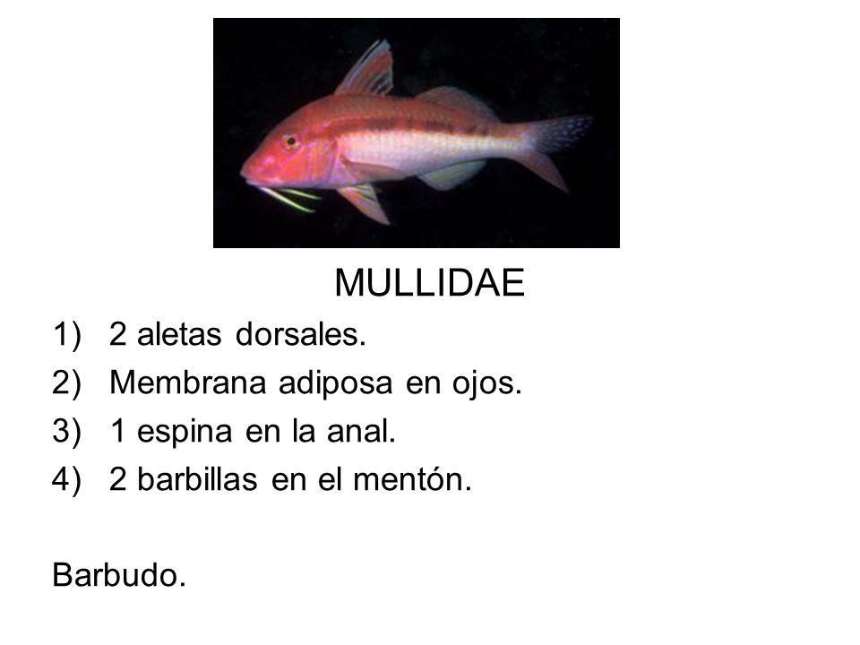 MULLIDAE 1)2 aletas dorsales. 2)Membrana adiposa en ojos. 3)1 espina en la anal. 4)2 barbillas en el mentón. Barbudo.