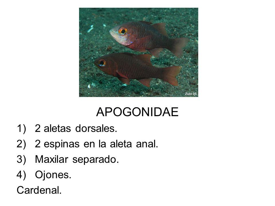 APOGONIDAE 1)2 aletas dorsales. 2)2 espinas en la aleta anal. 3)Maxilar separado. 4)Ojones. Cardenal.