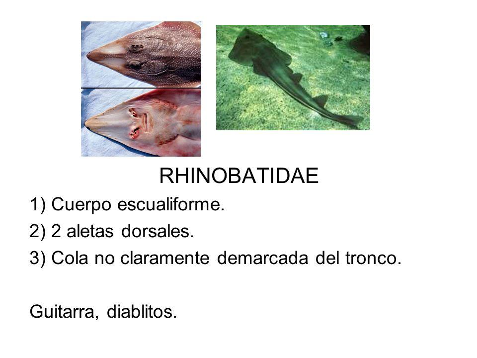 RHINOBATIDAE 1) Cuerpo escualiforme. 2) 2 aletas dorsales. 3) Cola no claramente demarcada del tronco. Guitarra, diablitos.