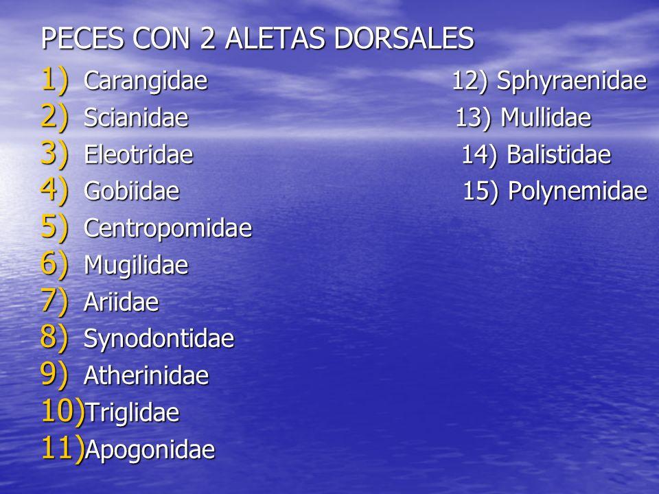 PECES CON 2 ALETAS DORSALES 1) Carangidae 12) Sphyraenidae 2) Scianidae 13) Mullidae 3) Eleotridae 14) Balistidae 4) Gobiidae 15) Polynemidae 5) Centr