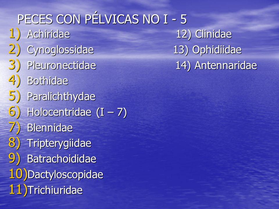PECES CON PÉLVICAS NO I - 5 1) Achiridae 12) Clinidae 2) Cynoglossidae 13) Ophidiidae 3) Pleuronectidae 14) Antennaridae 4) Bothidae 5) Paralichthydae