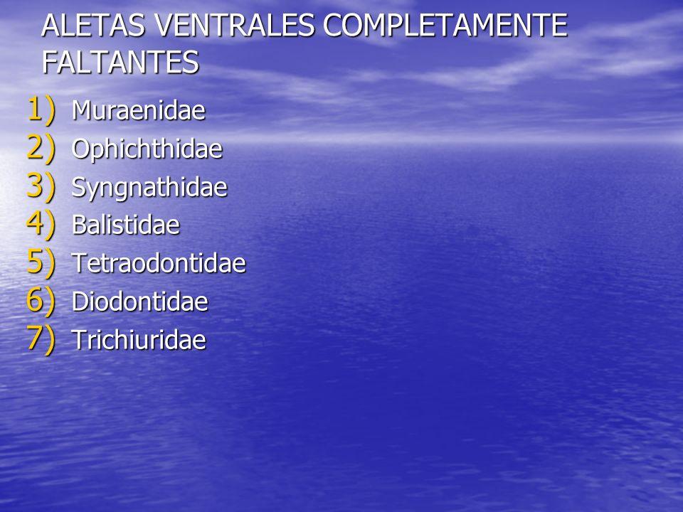 ALETAS VENTRALES COMPLETAMENTE FALTANTES 1) Muraenidae 2) Ophichthidae 3) Syngnathidae 4) Balistidae 5) Tetraodontidae 6) Diodontidae 7) Trichiuridae