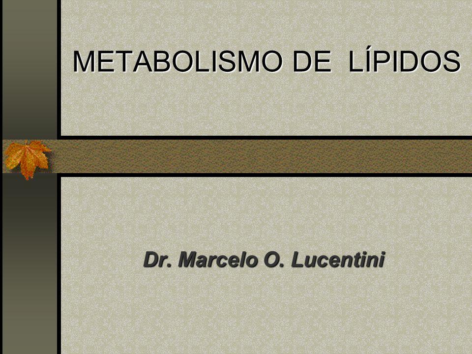 METABOLISMO DE LÍPIDOS Dr. Marcelo O. Lucentini Dr. Marcelo O. Lucentini