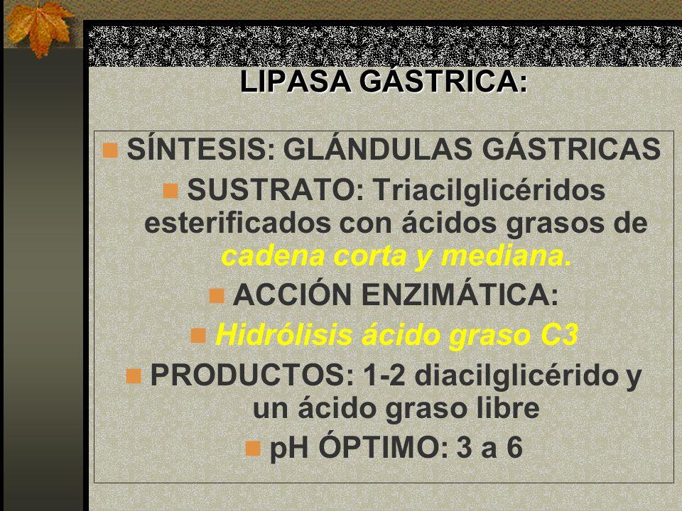 LIPASA GÁSTRICA: SÍNTESIS: GLÁNDULAS GÁSTRICAS SUSTRATO: Triacilglicéridos esterificados con ácidos grasos de cadena corta y mediana. ACCIÓN ENZIMÁTIC