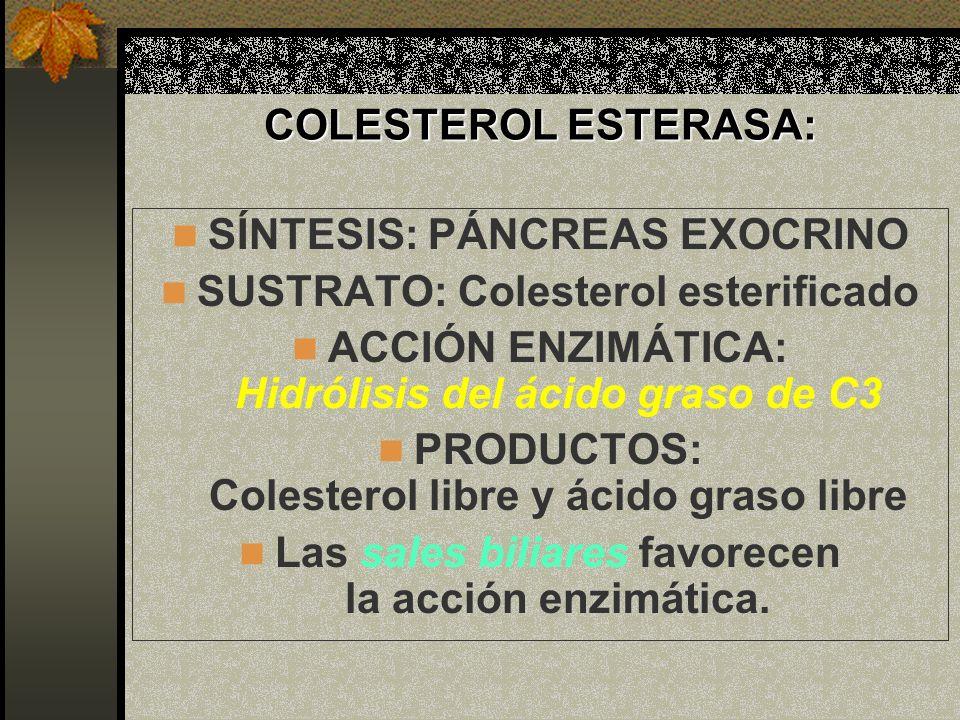 COLESTEROL ESTERASA: SÍNTESIS: PÁNCREAS EXOCRINO SUSTRATO: Colesterol esterificado ACCIÓN ENZIMÁTICA: Hidrólisis del ácido graso de C3 PRODUCTOS: Cole