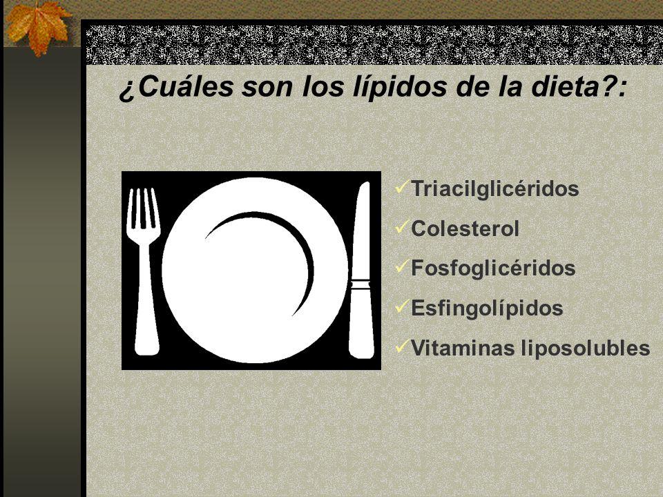 ¿Cuáles son los lípidos de la dieta?: Triacilglicéridos Colesterol Fosfoglicéridos Esfingolípidos Vitaminas liposolubles