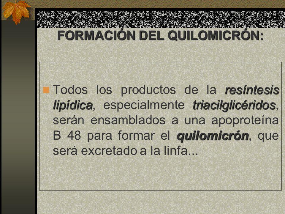 FORMACIÓN DEL QUILOMICRÓN: resíntesis lipídicatriacilglicéridos quilomicrón Todos los productos de la resíntesis lipídica, especialmente triacilglicér