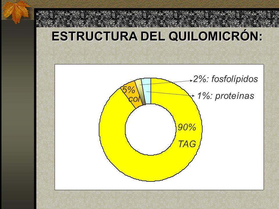 ESTRUCTURA DEL QUILOMICRÓN: 90% TAG 5% col 2%: fosfolípidos 1%: proteínas