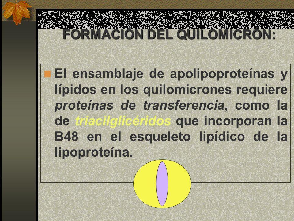 FORMACIÓN DEL QUILOMICRÓN: El ensamblaje de apolipoproteínas y lípidos en los quilomicrones requiere proteínas de transferencia, como la de triacilgli