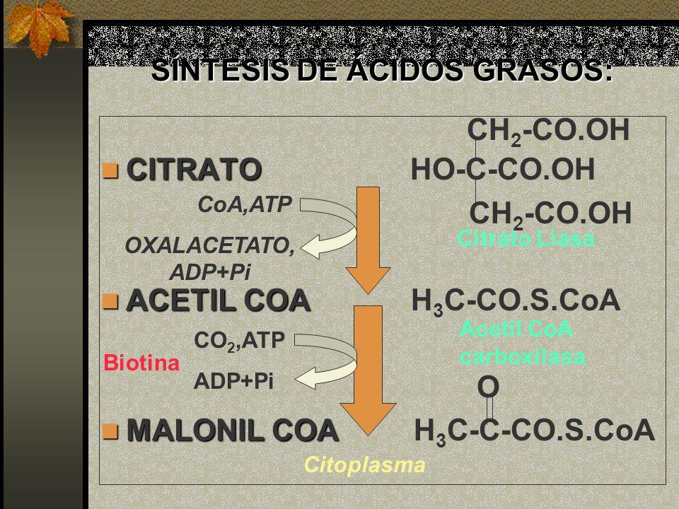 SÍNTESIS DE ÁCIDOS GRASOS: CITRATO CITRATO HO-C-CO.OH CH 2 -CO.OH ACETIL COA ACETIL COA H 3 C-CO.S.CoA O MALONIL COA MALONIL COA H 3 C-C-CO.S.CoA CO 2