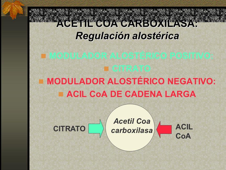 ACETIL COA CARBOXILASA: Regulación alostérica MODULADOR ALOSTÉRICO POSITIVO: CITRATO MODULADOR ALOSTÉRICO NEGATIVO: ACIL CoA DE CADENA LARGA CITRATO A