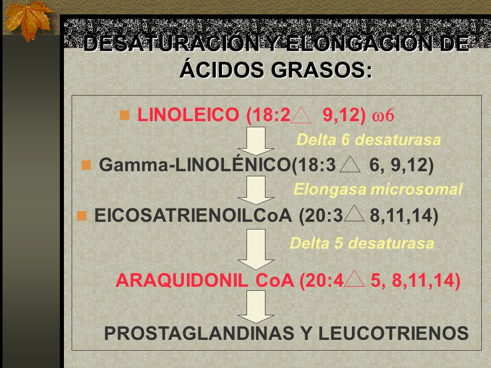 DESATURACIÓN Y ELONGACIÓN DE ÁCIDOS GRASOS: LINOLEICO (18:2 9,12) Gamma-LINOLÉNICO(18:3 6, 9,12) EICOSATRIENOILCoA (20:3 8,11,14) ARAQUIDONIL CoA (20: