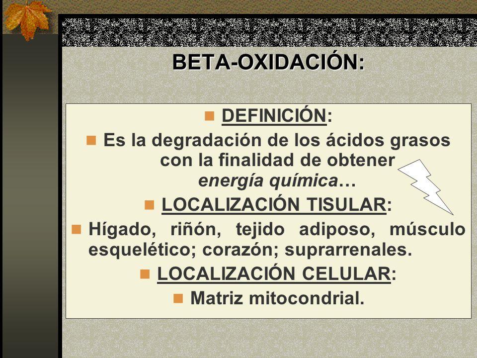 BETA-OXIDACIÓN: DEFINICIÓN: Es la degradación de los ácidos grasos con la finalidad de obtener energía química… LOCALIZACIÓN TISULAR: Hígado, riñón, t